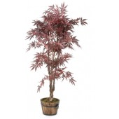 2*SS Acer Plant