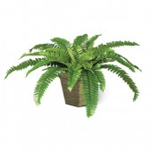 2*Boston fern-ceramic pot