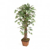 2*Ficus-terracotta effect pot